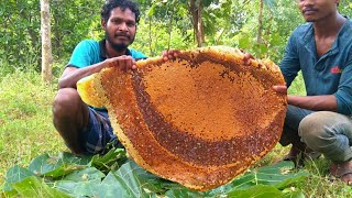 Worlds Biggest Honeycomb Harvest   Harvesting And Eating Honeycomb   Honey Hunting Video In India