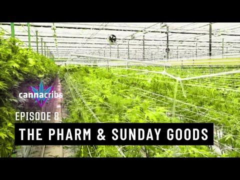Cannabis Genetics Legend at Sunday Goods & The Pharm