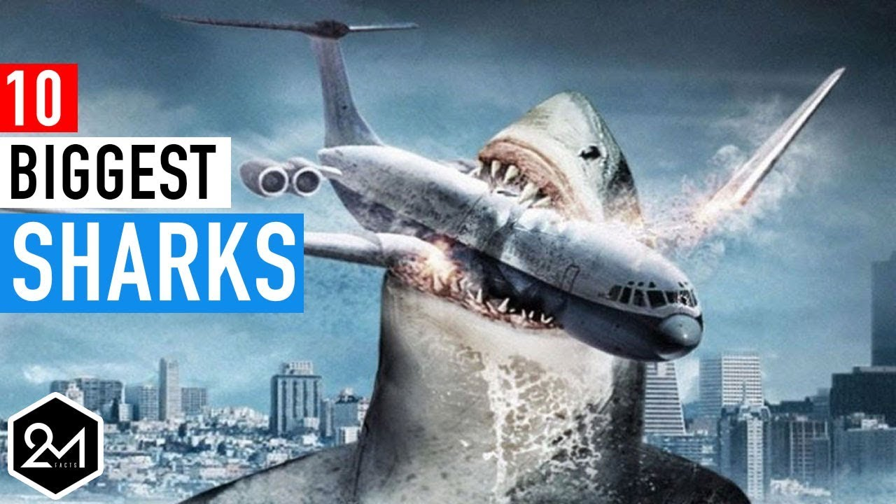 Top 10 Biggest Sharks In The World Ever Recorded - YouTube