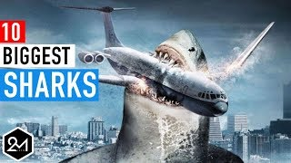 Top 10 Biggest Sharks In The World Ever Recorded thumbnail