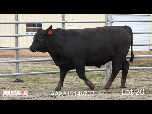 Clemson Extension Bull Test Lot 20