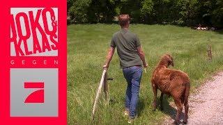 PREVIEW: Schafe in den Stall bringen: Schaffen sie die Aufgabe? | Joko & Klaas gegen ProSieben