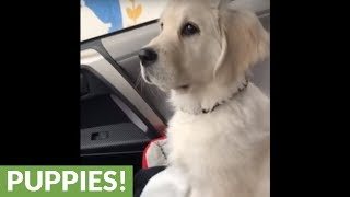 Puppy adorably confused by windshield wipers