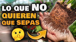 Los VIVEROS NO QUIEREN que SEPAS ESTO | 3 SECRETOS para Cuidar tus PLANTAS Huerto Urbano Jardín