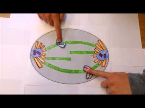 Kinetochore Structure And Function