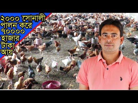 ржжрзБржЗ рж╣рж╛ржЬрж╛рж░ рж╕рзЛржирж╛рж▓рзА ржорзБрж░ржЧрж┐ ржкрж╛рж▓ржи ржХрж░рзЗ рж╕рждрзНрждрж░ рж╣рж╛ржЬрж╛рж░ ржЯрж╛ржХрж╛ ржЖрзЯ ржХрж░рзБржи keeping sonali chicken and make farm