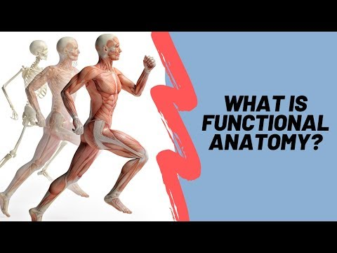 Learn Functional Anatomy To Design Better Exercises