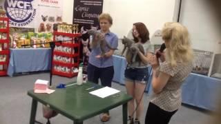 Русские голубые котята !