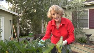 How to Prune Zucchini : Urban Garden