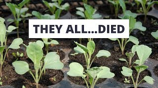 4 Reasons All My Seedlings Died