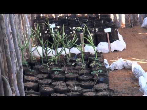 Madagascar avec l'ONG Bel Avenir à Mangily