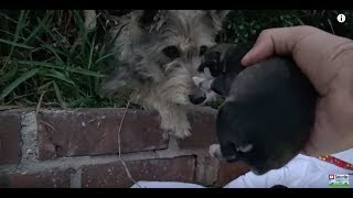 野良犬のサマーは、アメリカ・ロサンゼルスの路上で暮らしていました。 ...