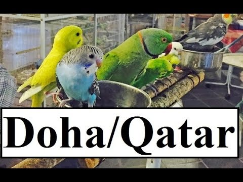 Qatar/Doha Waqif BIRDS Souq  Part 9