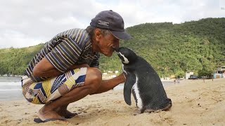 An old man saved a penguin which later became the most devoted friend in his life