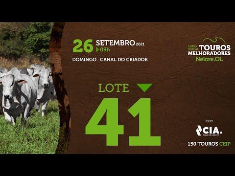 LOTE 41 - LEILÃO VIRTUAL DE TOUROS 2021 NELORE OL - CEIP