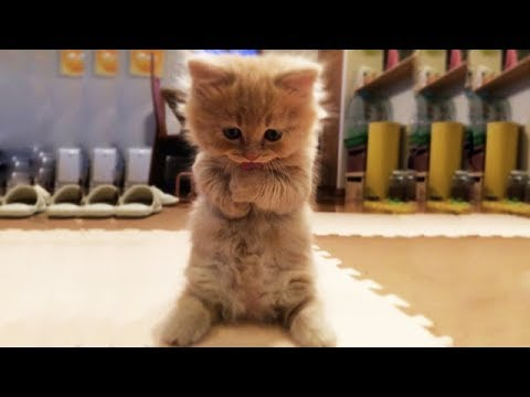 Cute is Not Enough – Funny Cats and Dogs Compilation #14
