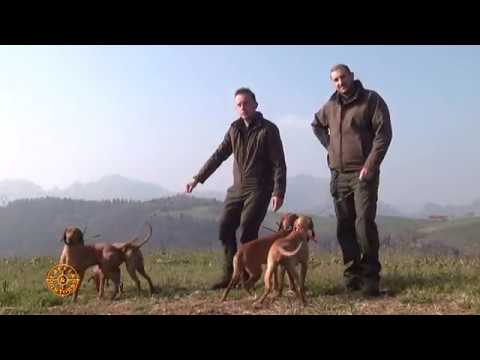 XII Prova per cani da lavoro su lepre a Marmentino