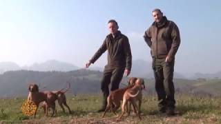 Video 12° Prova per cani da lavoro su lepre a Marmentino download MP3, 3GP, MP4, WEBM, AVI, FLV Mei 2018