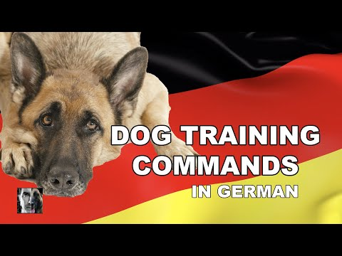 German Dog Training Commands - Robert Cabral Dog Training Video