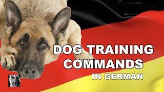 German Dog Training Commands  Robert Cabral Dog Training Video