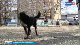 В Кисловодске ищут желающих заняться отловом бродячих собак