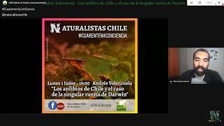 Andrés Valenzuela - Los anfibios de Chile y el caso de la singular ranita de Darwin