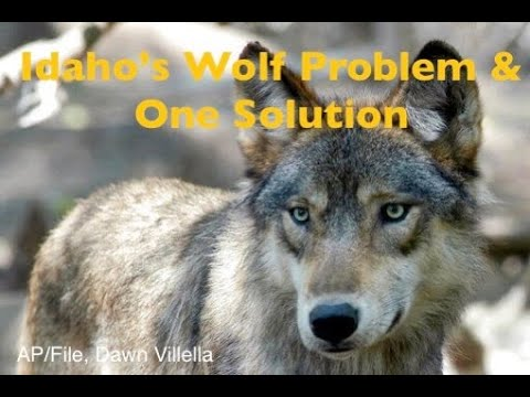 Idaho's Wolf Problem & A Hunter's Solution