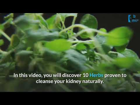 10 Best Herbs For Natural Kidney Cleansing and detox (work 100%)