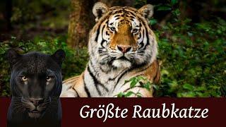 Der Tiger - Die größte Raubkatze der Welt
