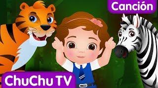 Vamos a ir al bosque | Animales Salvajes para Niños | Canciones Infantiles Populares de ChuChu TV