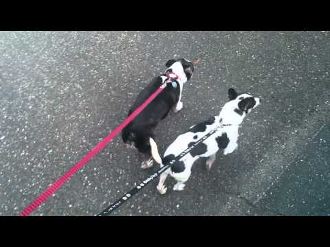 Walking with a blind and deaf dog is... slow.