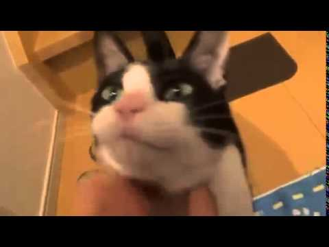 Cat Welcomes Owner Home