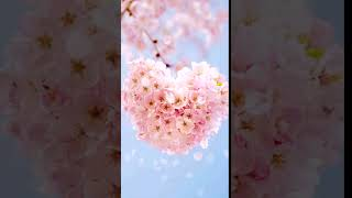 [Samsung Themes Animated Wallpaper] Heart blossom screenshot 5