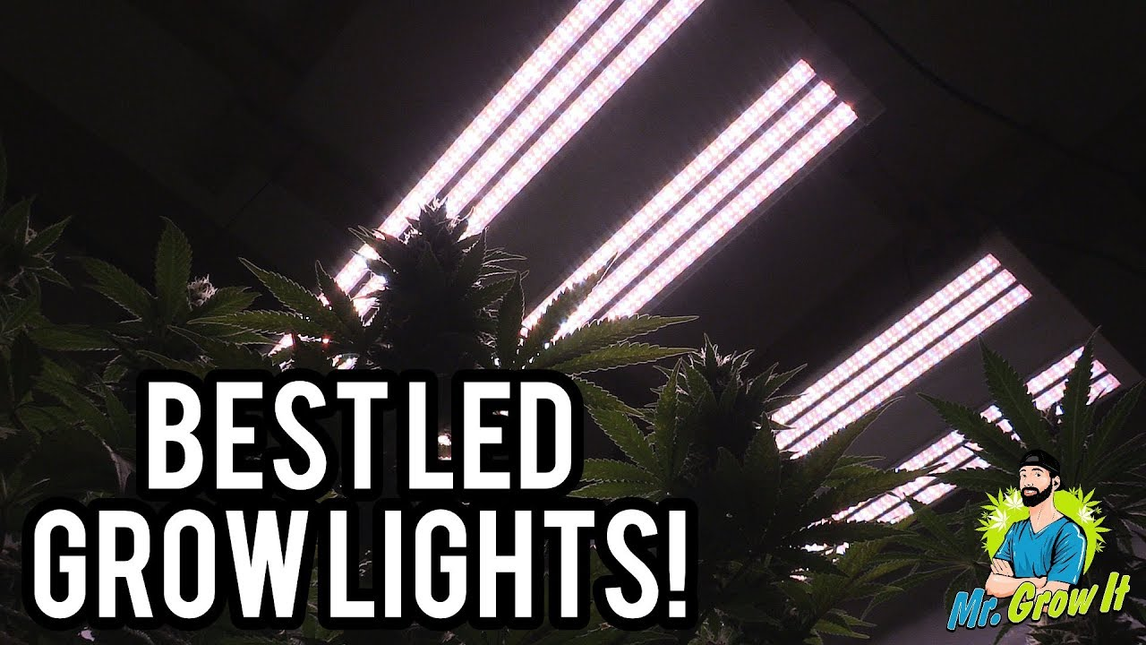 BEST LED GROW LIGHTS 2019! - 4X4 COVERAGE AREA - YouTube