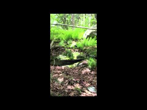 Herp Hunting in Central Connecticut