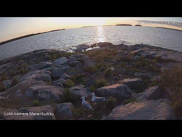 Lokkiperhe koolla auringon laskussa