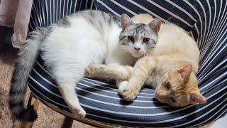 [고양이] 그리고 마늘까기 #3