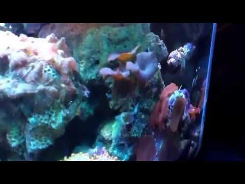 20 gallon reef - 04012014
