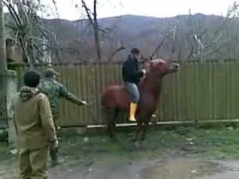 ალიკას ცხენი