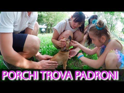 Porchi ha Trovato suoi Padroni! parte.8