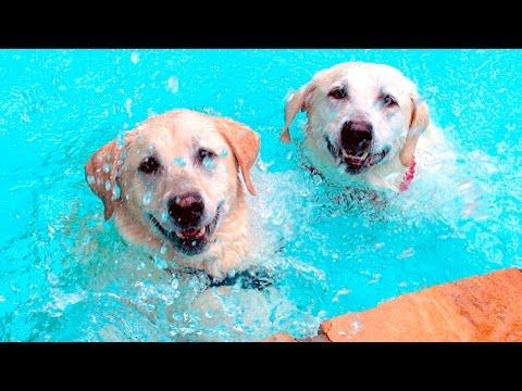 Puppies Playing in Water #87