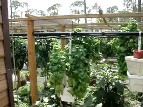HYDROPONIC VERTICAL GARDEN FINCHES AND WATER LILIES WITH BEE VIDEO