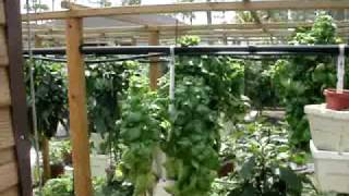 HYDROPONIC VERTICAL GARDEN FINCHES AND WATER LILIES WITH BEE VIDEO #3