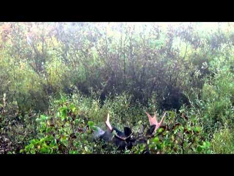 Bowhunting Moose in Ontario