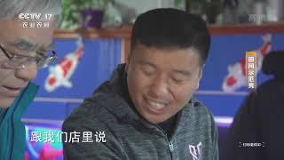 《田间示范秀》 20200112 绚丽锦鲤养成记|CCTV农业