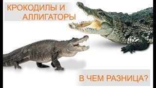 крокодил и аллигатор! В чем разница и как отличить?