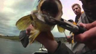 TRUE FISHING...MASSIVE GOLDEN PERCH...TEAM GOODANG!!!