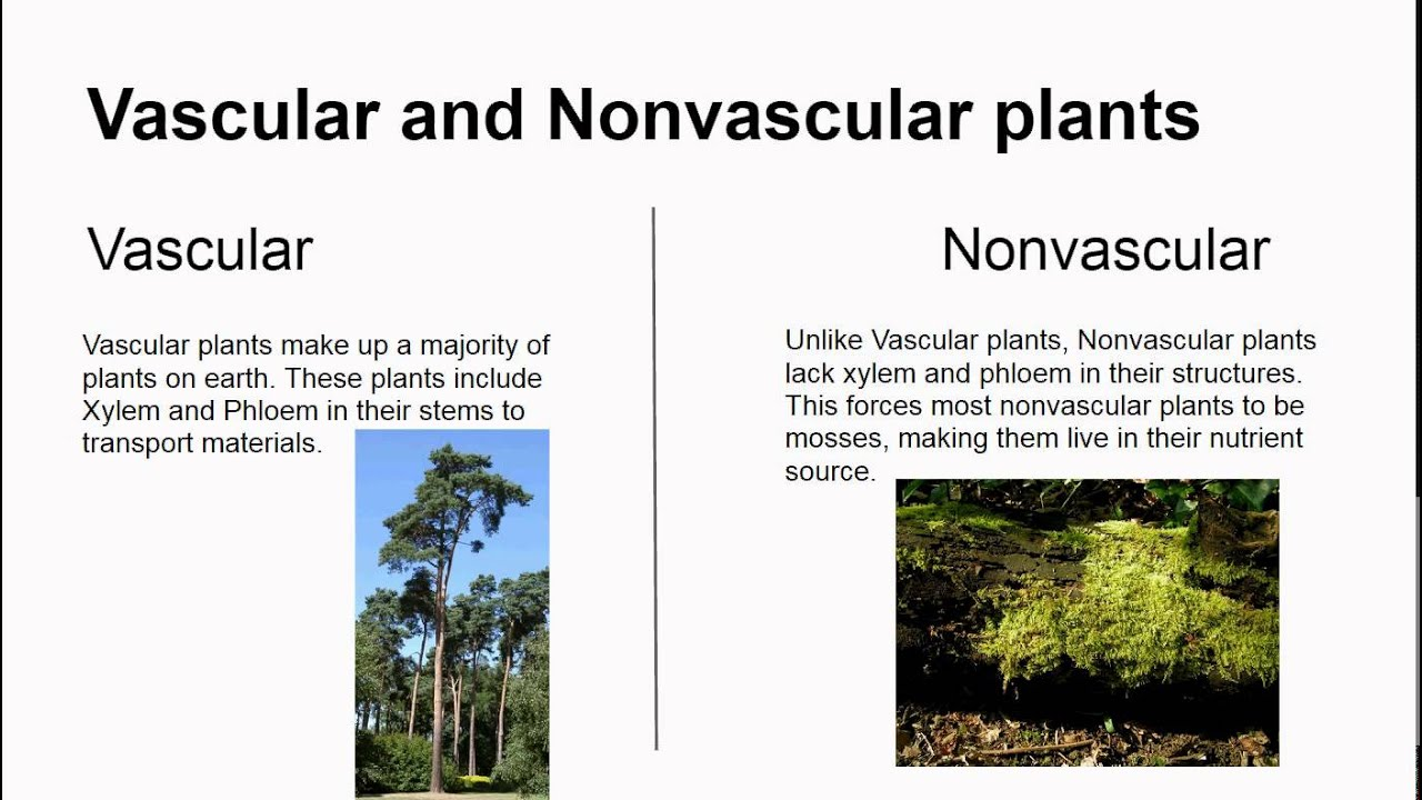 vascular and nonvascular plants activity for kids