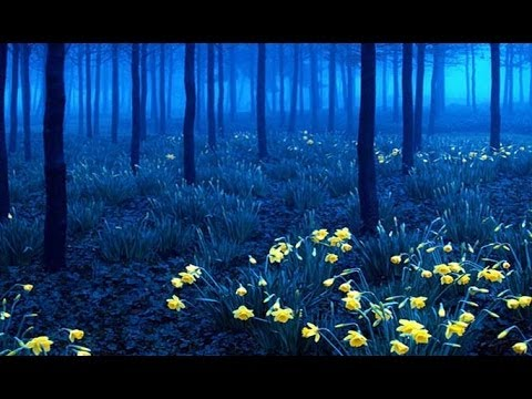 Incredibly Beautiful Forests from around the world HD 2014