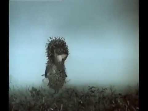 прикол Ежик в тумане;)